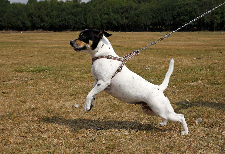 Best Harness For Leash Reactive Dog